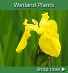 Native Wetland Plants