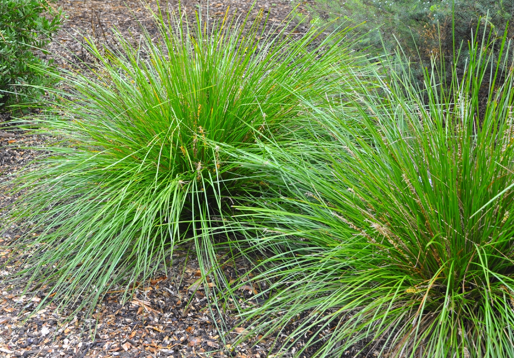 Native Grasses Attracts Wildlife - Tennessee Wholesale Nursery