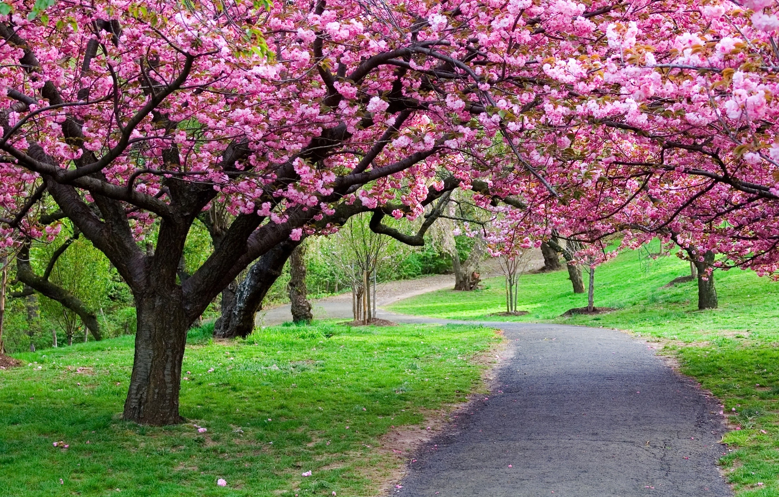 Most Loved Flowering Trees That People Use In Gardening