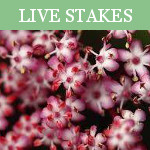 Live Stakes