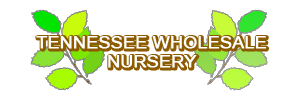 Tennessee Wholesale Nursery